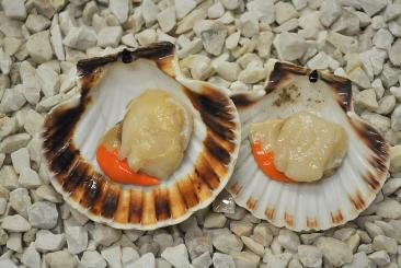 Scallop in half shell